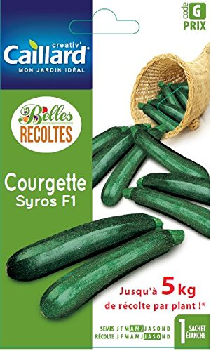 Caillard PFCC12542 Syros Hybride F1 Courgette