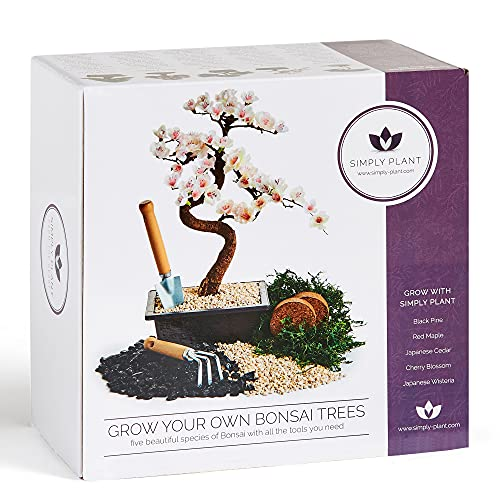 Bonsai Tree Kit - Grow Your own Kits Bonsai Tree Indoor Plant with a Variety of 5 Bonsai Trees Seeds Included and All The Bonsai Tools You Need Gardening Gifts (Small Bonsai)