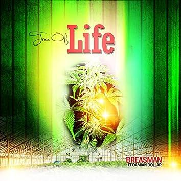 Tree of Life (feat. Damian Dollar)
