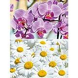 GREAT ART Set de 2 carteles XXL | 140 x 100 cm | con motivos florales orquídeas y margaritas prado naturaleza primavera verano vellorita | Foto Póster de Pared Mural Imagen Decoración