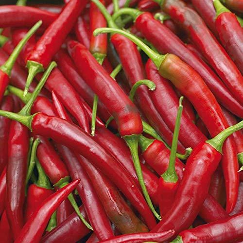 Volmary Cayenne-Peperoni 'Fireflame F1' | Saatgut | deftig und exotisch | Scharfer Cayenne-Pfeffergeschmack | für 10 Pflanzen