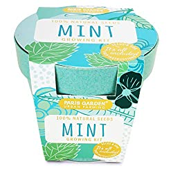 Paris Garden Bio Pot, Mint