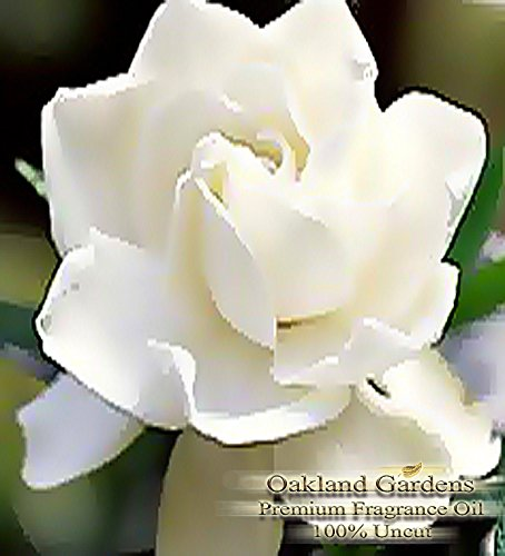 BULK Fragrance Oil - GARDENIA Fragrance Oil - Very strong white floral. Distinctive and lush - By Oakland Gardens (030 mL - 1.0 fl oz Bottle)