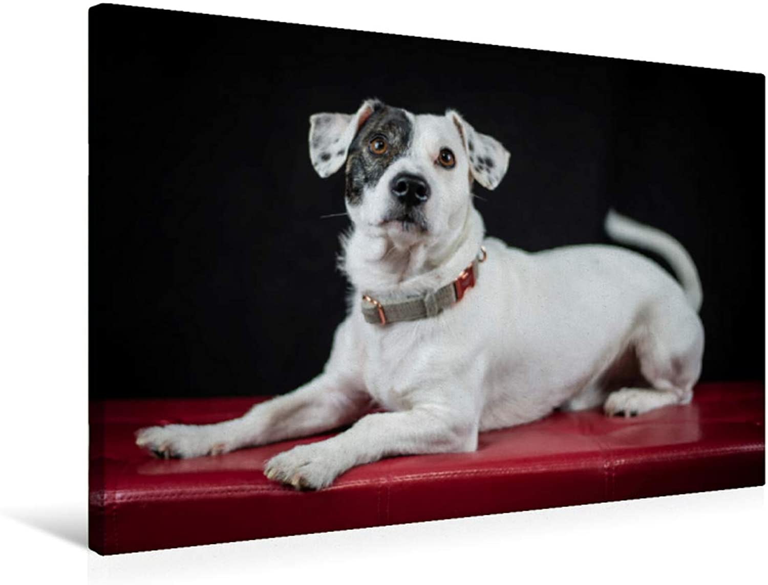 Also Jack Russel can be Noble, MultiColoured, 75x50