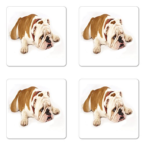 Ambesonne English Bulldog Coaster Set of 4, Sad and Tired Bulldog Laying down European Pure Breed Animal Photography, Square Hardboard Gloss Coasters, Standard Size, Brown Cream