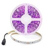 Arotelicht 12V Tira de luz LED UV 2835 SMD 300 LEDs 395-405nm 16.4ft(5m) Tira de Luces negra Tira de luz fluorescente de neón...