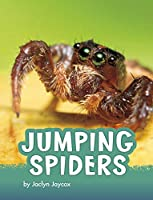 Jumping Spiders (Pebble Explore)