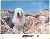 Digby, the Biggest Dog in World - Movie Poster