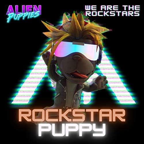 Rockstar Puppy