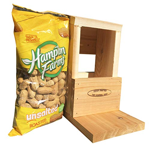 Classic Squirrel Feeder with Peanuts