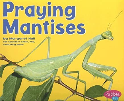 Praying Mantises (Bugs, Bugs, Bugs!) by Hall, Margaret (2004) Paperback