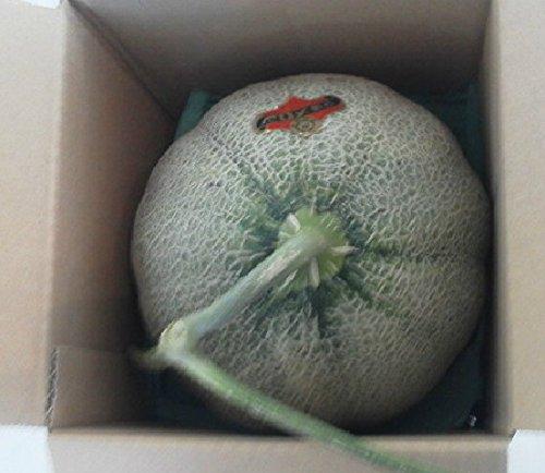 北海道夕張メロン 共撰 良品 1玉 約2kg