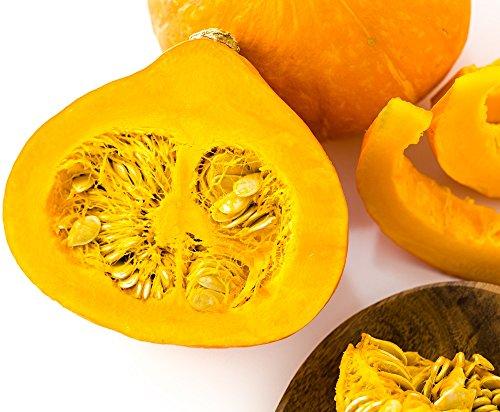 bio potimaron 15 graines semences POTIMARRON ROUGE  Seeds produit en France