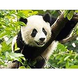 RQMQRL Decoración del Hogar DIY 5D Diamante Bordado Panda Punto De Cruz Set Pintura Al Óleo Abstracta Resina Hobby Craft