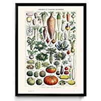 larousse vp1027-50 x 70 cm - illustrazione vegetale - stampa vintage 2 - ortaggi - arte cucina - arte cucina - scienza botanica - larousse