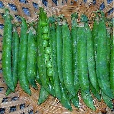 100 graines de pois Green Arrow Graines de jardin