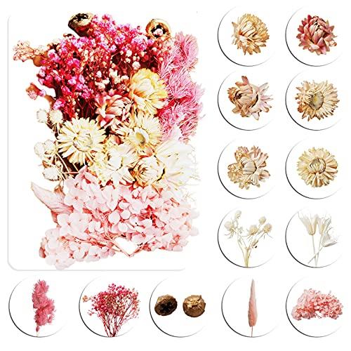 Flores Secas Manualidades flores secas  Marca Herefun