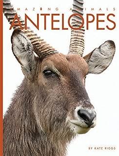 Antelopes (Amazing Animals)