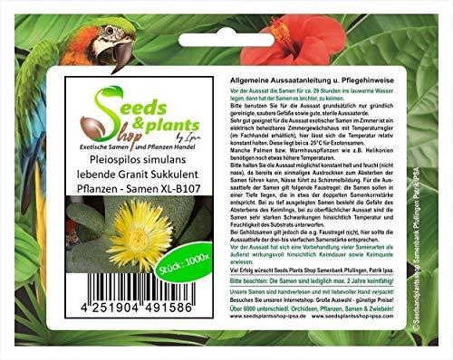 Stk - 1000x Pleiospilos Simulans Viviente Granito Sukkulent Plantas - Semillas XL-B107 - Seeds Plants Shop Samenbank Pfullingen Patrik Ipsa
