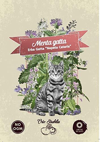 Erba gatta,Menta gatta,Nepeta cataria,gr 0,3,semi rari,semi strani,orto strabilia