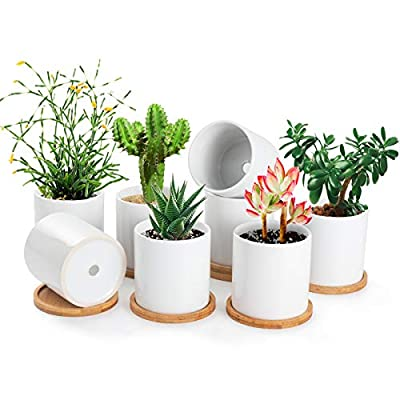 small plant pots for succulents