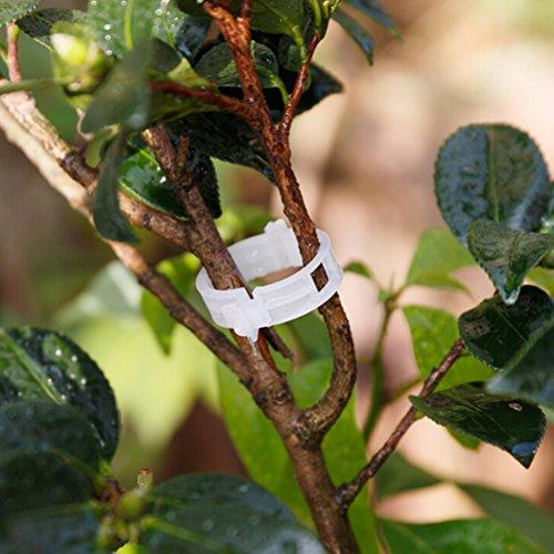 Nouveaux types de clips 50 pcs Plastique durable support pour plantes pour plantes à suspendre Vine Jardin Légumes Jardin outils de combinaison