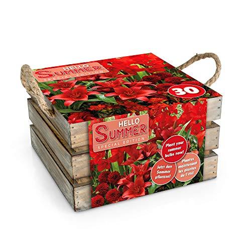 Mix Blumenzwiebeln \'\'Hello Summer\'\' Red | Mischung Hello Summer Blumenzwiebeln | Rot | 30 Knollen