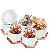 Succulent Pots, OAMCEG 4 Inch Succulent Planters, Set of 6 White Ceramic...