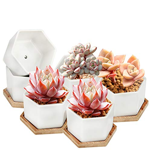 Succulent Pots, OAMCEG 4 Inch Succulent Planters, Set of 6 White Ceramic Succulent Cactus Plant Pots with Bamboo Tray(Plants NOT Included)