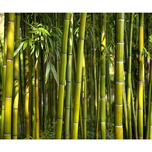decomonkey Fototapete selbstklebend Bambusatur 343x256 cm XXL Selbstklebende Tapeten Wand Fototapeten Tapete Wandtapete klebend Klebefolie Wald