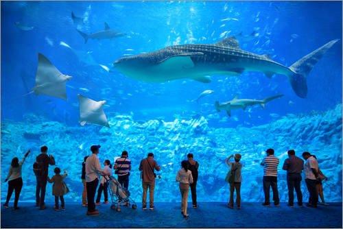 Posterlounge Acrylglasbild 90 x 60 cm: Großes Aquarium mit Haien, Mantarochen und Walhai von Jan Christopher Becke - Wandbild, Acryl Glasbild, Druck auf Acryl Glas Bild