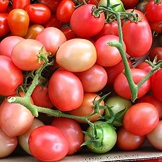 Thai Pink Egg Tomato Seeds - 10+ Organic Heirloom Tomato Seeds