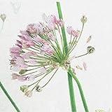 SIDCO Tischläufer Allium Tischtuch Tischband Tischdecke Frühling Schmetterling 40x150 - 2