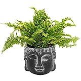 Cabeza de Buda de cemento Ø15x12cm, maceta, cabeza de planta, negro