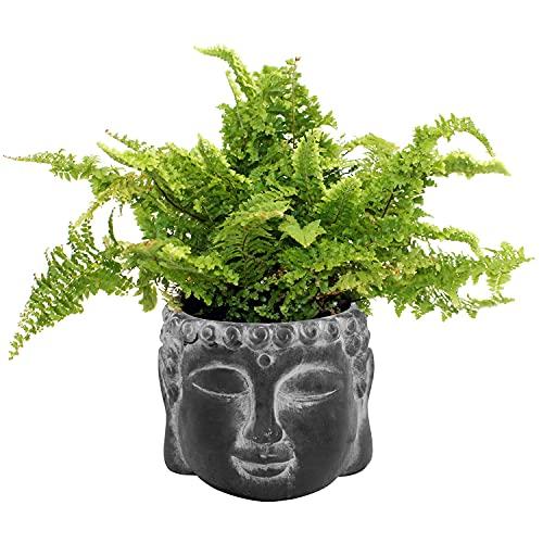 Testa di Buddha in cemento Ø15x12cm, vaso di fiori, vaso per piante, scatola per piante, testa per piante, nero