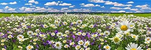 Wiese Blumen Natur Landschaft XXL Panorama Wandtattoo Poster Aufkleber W0003 Größe 300 cm x 100 cm