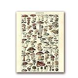 Impresiones botánicas antiguas Cartel de setas de la vendimia Versión en francés Arte educativo de la pared Pintura de la lona Imagen Decoración de la pared del hogar-50x70cmx1 Sin marco