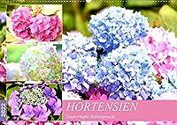 Hortensien. Zauberhafte Bluetenpracht (Wandkalender 2022 DIN A2 quer): Prachtvolle Blumen mit echtem Show-Effekt fuer Balkon und Garten. (Monatskalender, 14 Seiten )