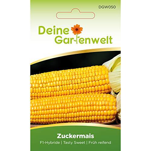 Zuckermais F1 Samen | Maissamen | Saatgut für süßen Mais | Gemüsesamen