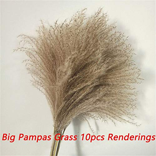 HNLY Natural Dry Small Pampas Grass, Reed Decoration, Dry Wheat Grass Bouquet, Dry Wheat Grass, Pampas Grasses For Weddings And Photo Shoots (30Pcs)