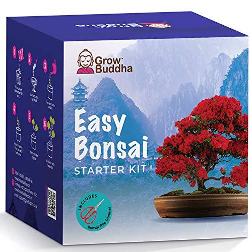 Bonsai-Baum Starter Kit | Züchten Sie Ihre eigenen 8 schönen Bonsai-Baumsorten zu Hause| Komplettes Zuchtset - Anfängerfreundlich - Zucht von Zimmerpflanzen - Unvergessliche Geschenkidee