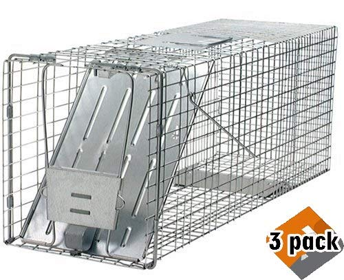 Havahart 1079 Large 1-Door Humane Animal Trap for Raccoons, Cats, Groundhogs, Opossums - 3 Pack