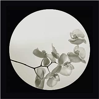 Orchid II by Ian Winstanley 20