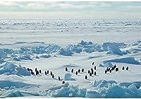HD 7x5ft氷河の写真撮影の背景ペンギングループ南極北極域無限の氷山風景写真冬凍結した世界テーマパーティーの背景写真撮影用写真の小道具
