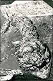 A unique knot used to lock the anchor cable on Vasa. - Vintage Press Photo