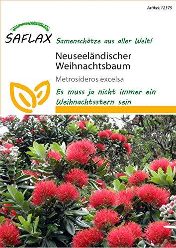 Saflax 12375 Neuseeländischer Weihnachtsbaum (Neuseeländischer Weihnachtsbaumsamen)