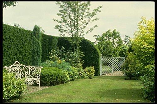 131079 Smeedijzeren poort en tuinstoel A4 Photo Poster Print 10x8