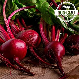 Gaea's Blessing Seeds - Organic Beet Seeds 150+ Seeds Detroit Dark Red Non-GMO Heirloom 92% Germination Rate