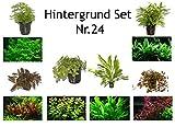 Hintergrund Set mit 6 Tropica Topf Pflanzen Aquariumpflanzenset Nr.24 Wasserpflanzen