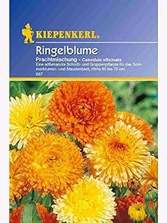 Calendula Ringelblume Prachtmischung